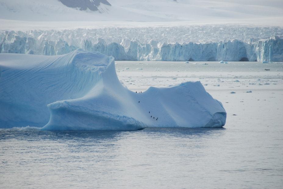 penguins on an iceberg near the coast of Antarctica
