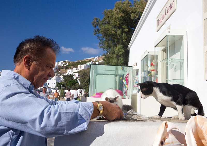 Cats in Mykanos Greece