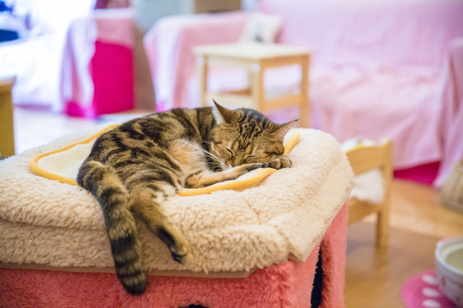 cat sleeping in Japanese cafe