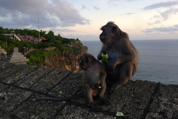 2 monkeys near Bali temple overlooking ocean