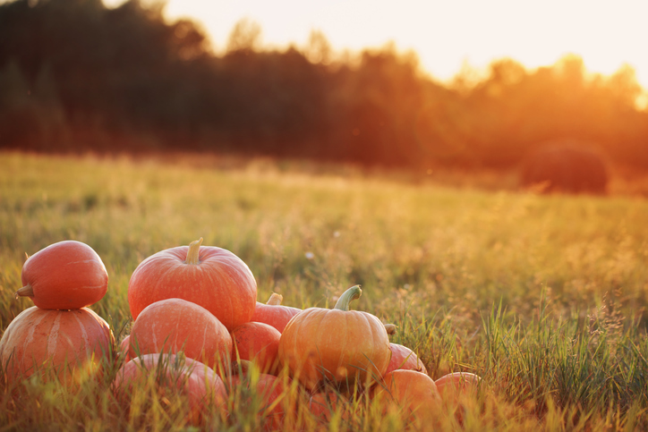 Red Deer's Pumpkin Season Kick Off