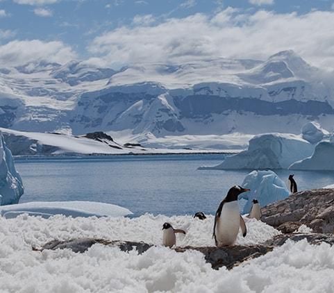 Antarctica - Week 6 Photo