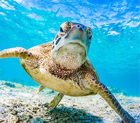 Turtle, Australia - Week 4 Photo