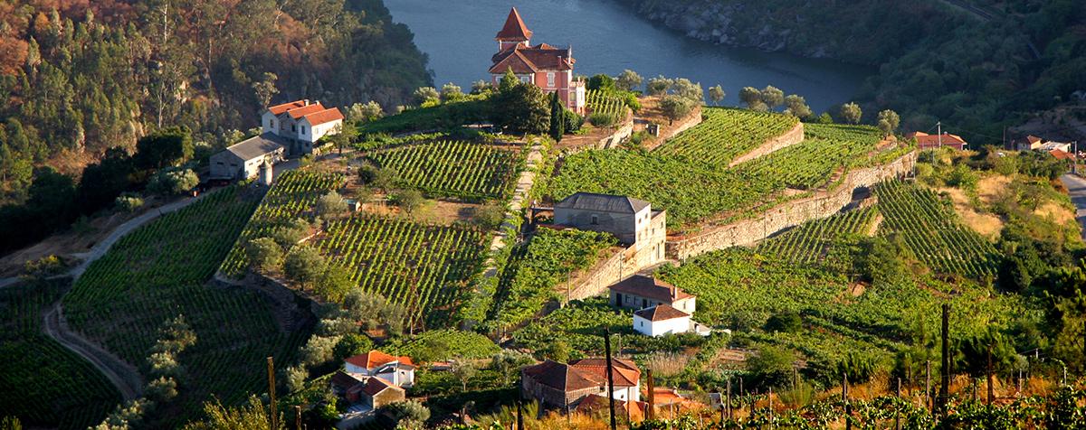 Duoro Valley Vineyards