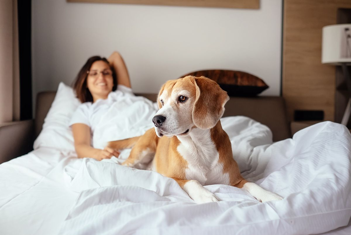 dog friendly hotels canmore