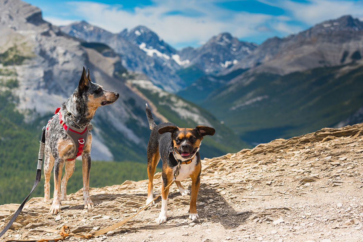 dogs in canmore