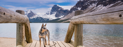 Pet Friendly Travel in Canmore